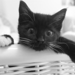 cat-923297_1280