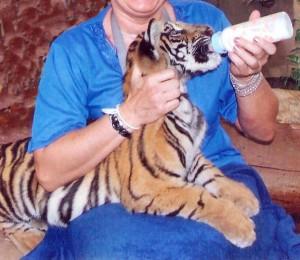 karmienie tygryska1
