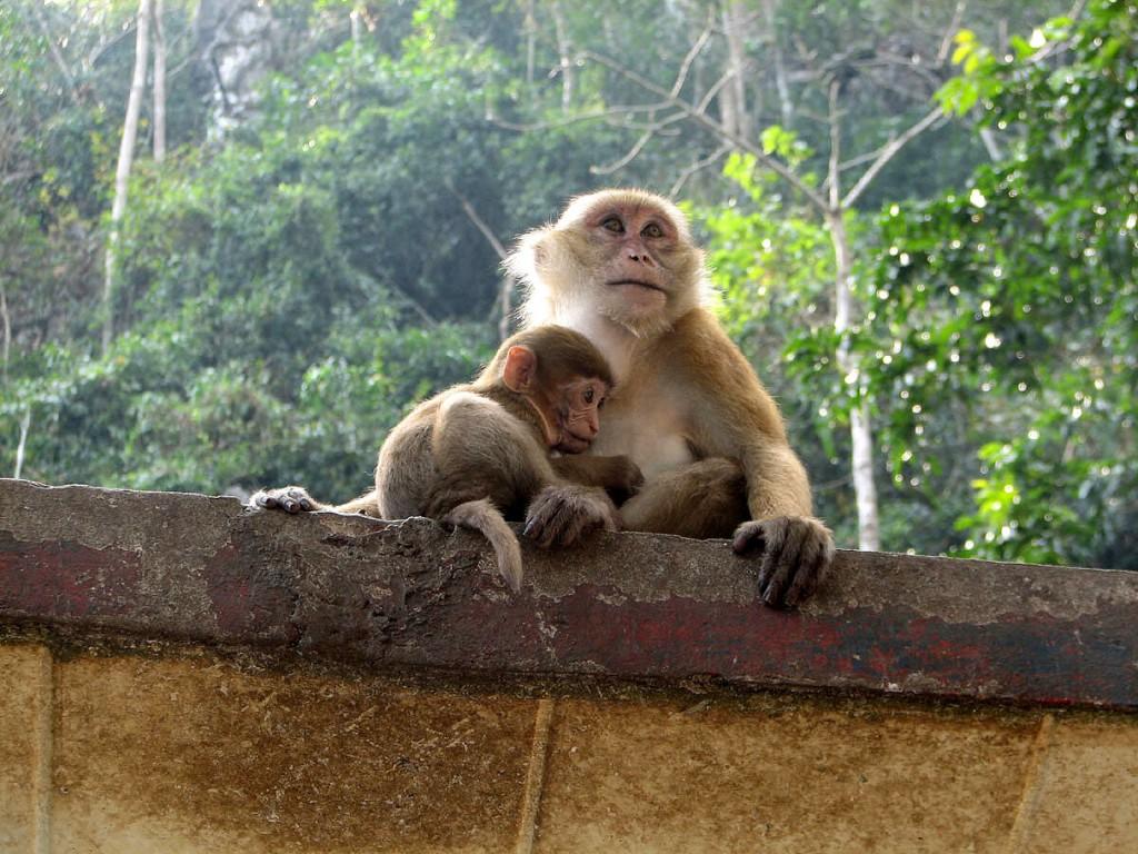 małpa z dzieckiem