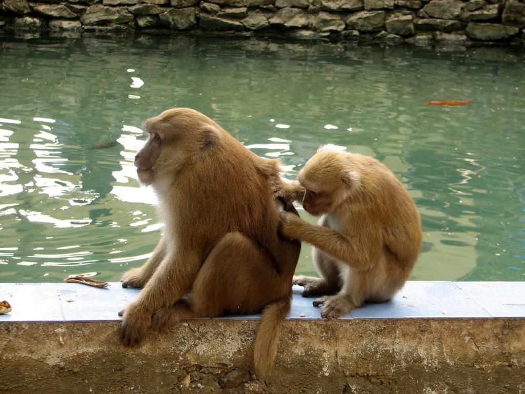 małpy