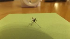 mosquito-606930_1280