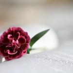 bible-888299_1920
