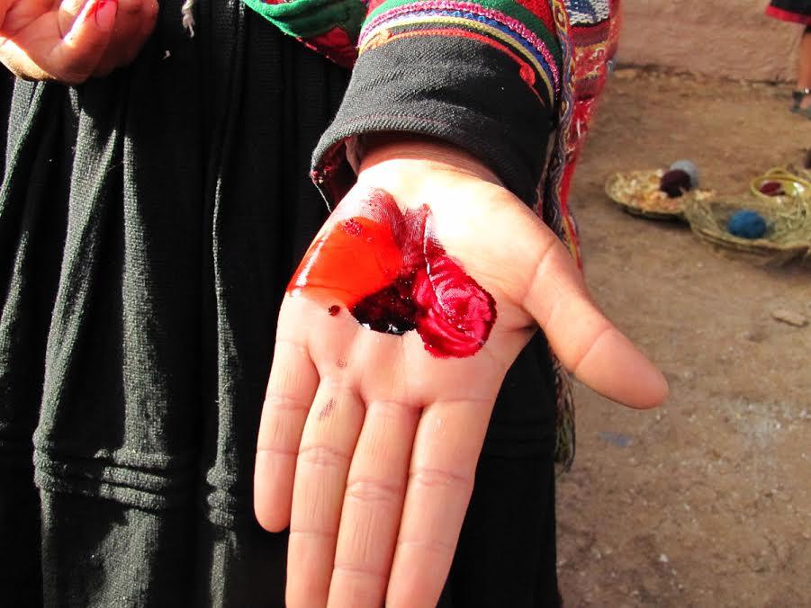Barwnik koszelina z roztartego pluskwiaka