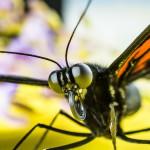 butterfly-376876_1920
