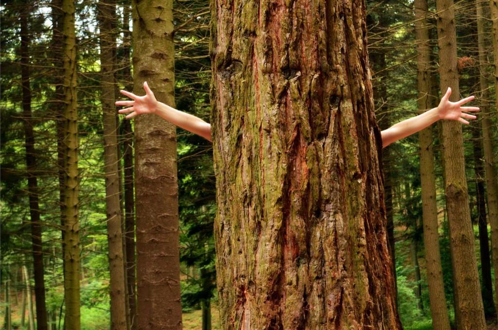 źródło: www.flicr.com/ foto: Marina del Castell