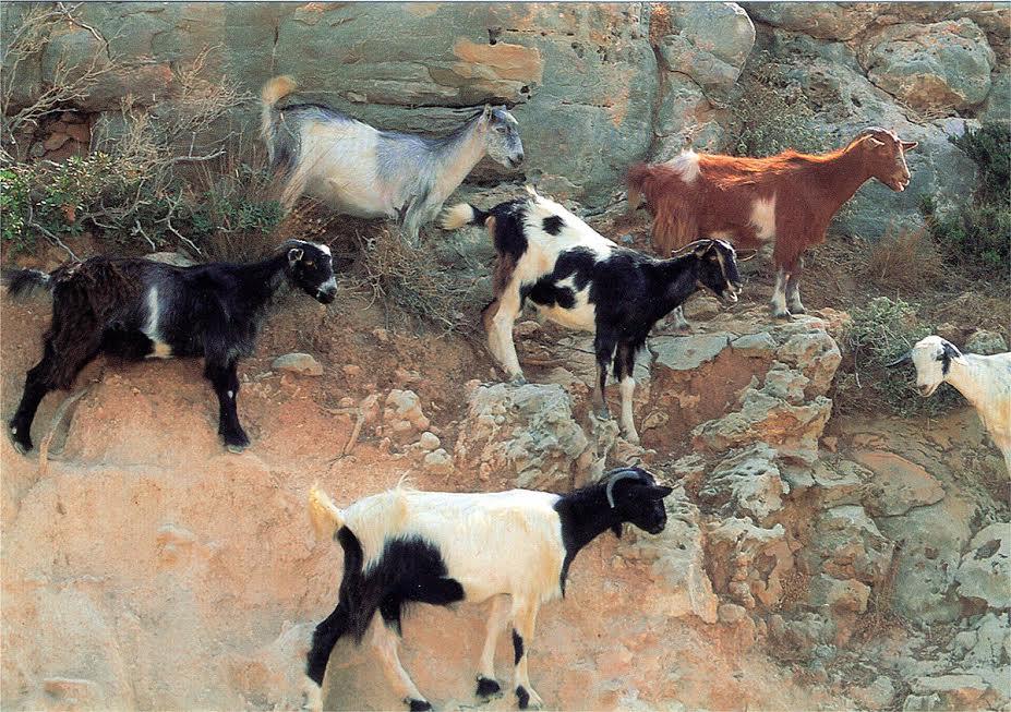 kozy na skałach