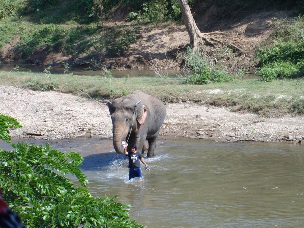 Jeden z kornaków ze swoim słoniem