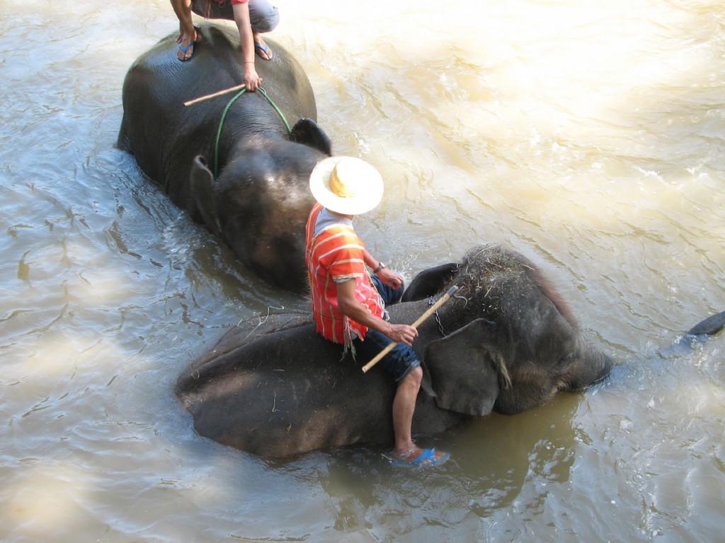 Kąpiące się słonie
