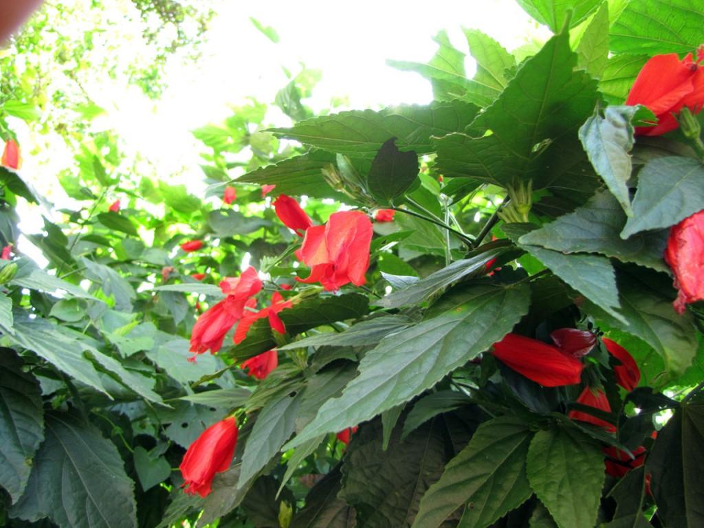 kwiaty w dżungli