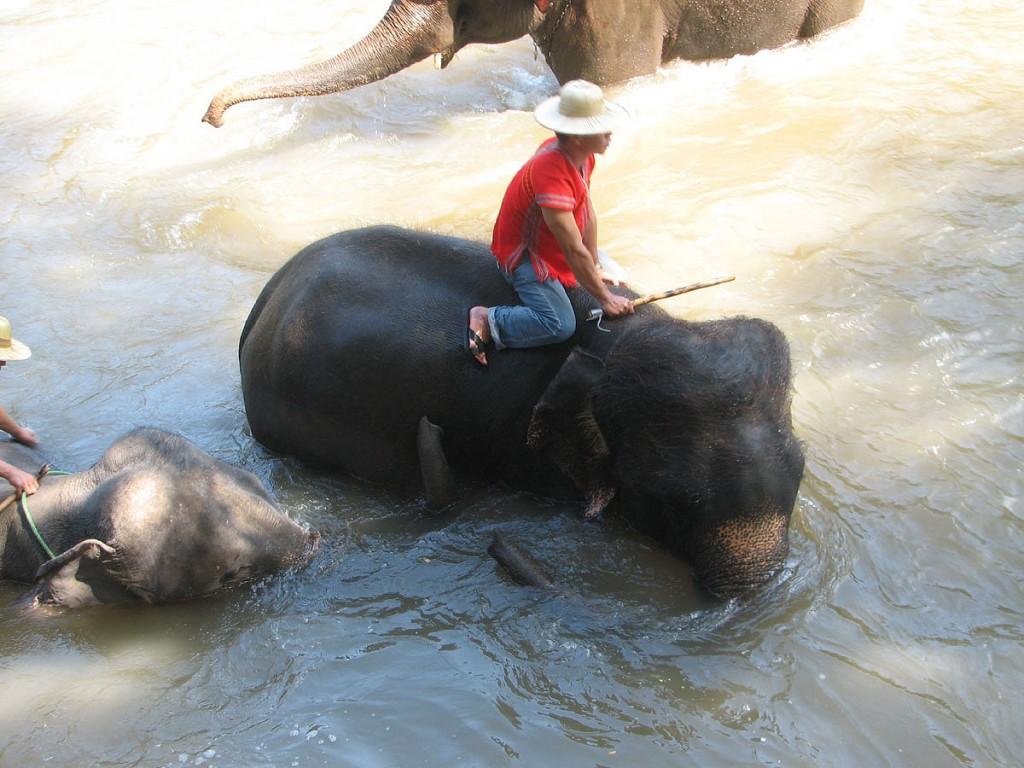słonie w kąpieli