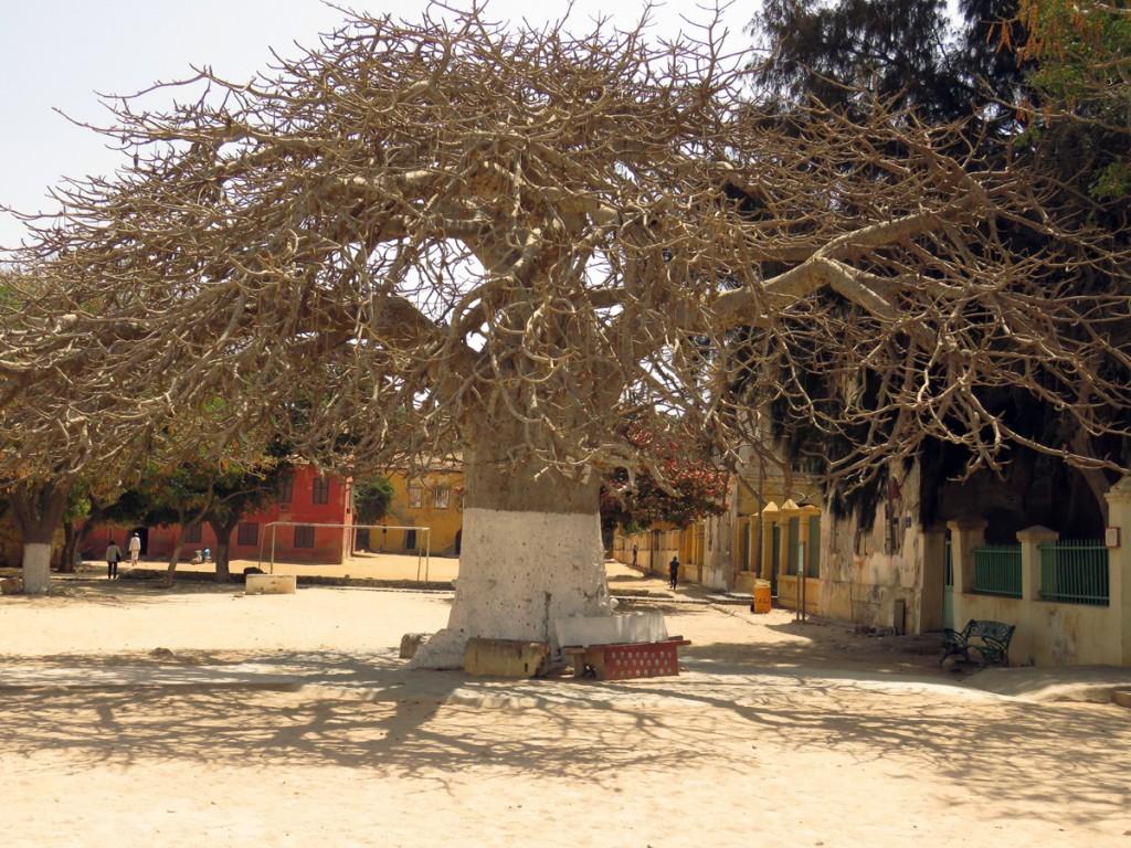 święty baobab w centrum