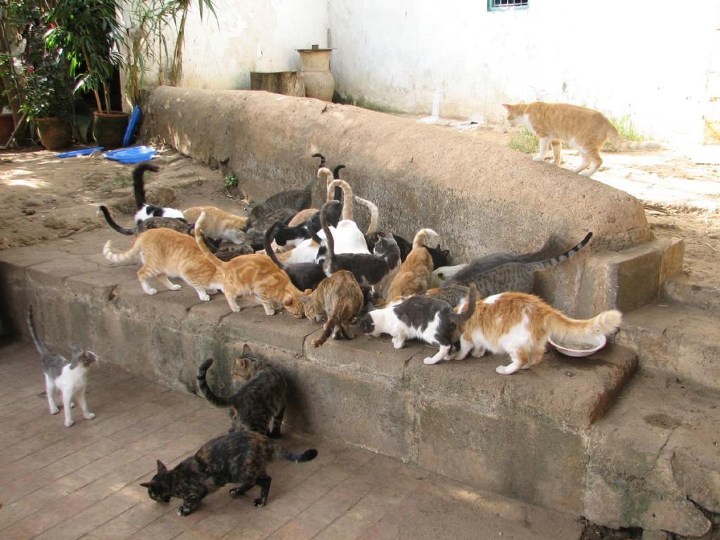 ostoja kotów w Chellah
