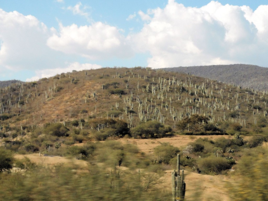 Obszary pustynne