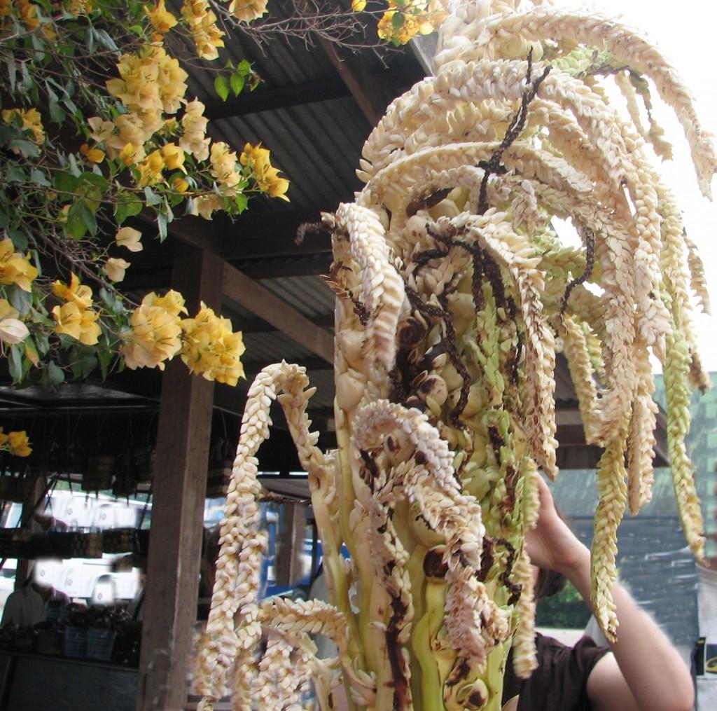 kwiatostan kokosowej palmy