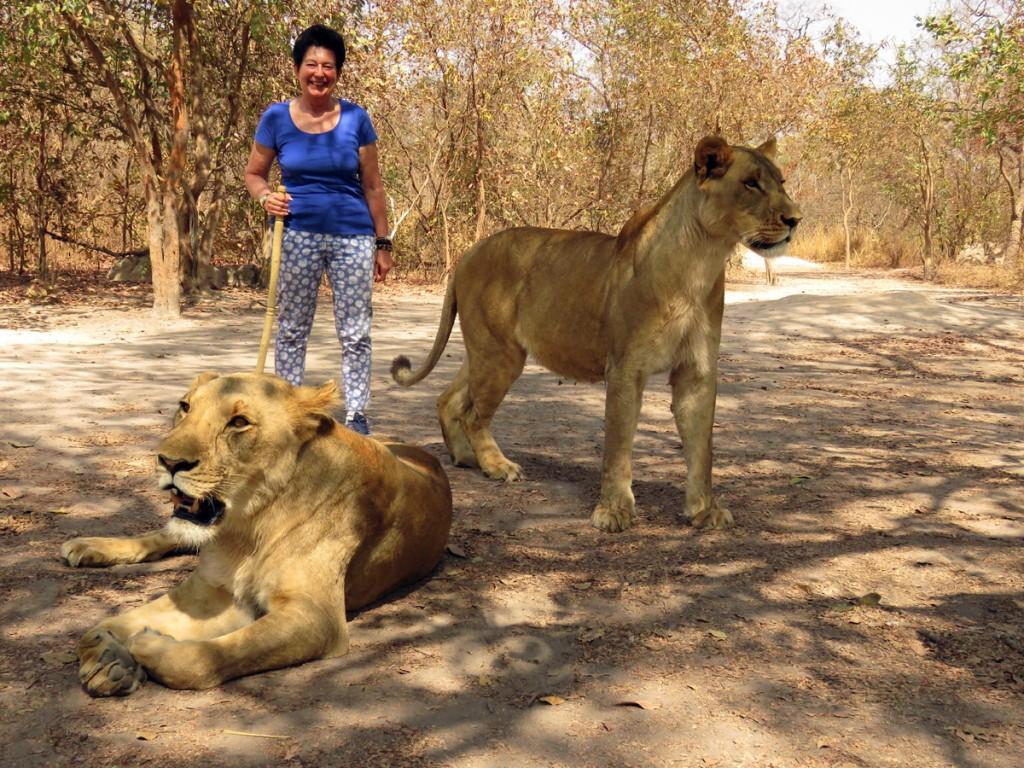 W towarzystwie lwic