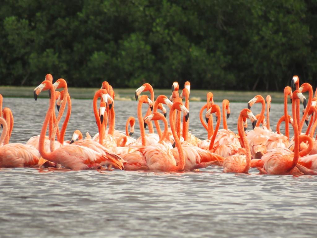 Flamingi w grupie