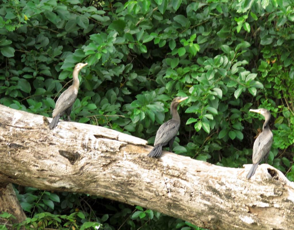 Ptaki w kanionie