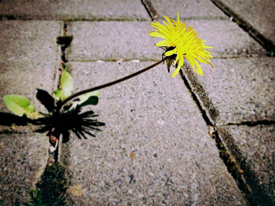 """KOBIECYM OKIEM: """"Wiosna pszczołami rozkwita"""", esej Urszuli Wojnarowskiej-Curyło"""